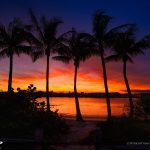 Jupiter Island Coconut Trees along the Waterway Sunset
