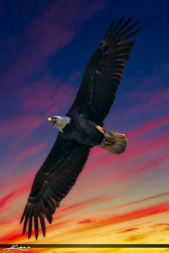 American Bald Eagle with Bright Colored Sky