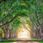 Bridge Road Tree Canopy Hobe Sound Florida