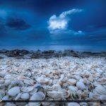 Coral Cove Park Shells On Beach