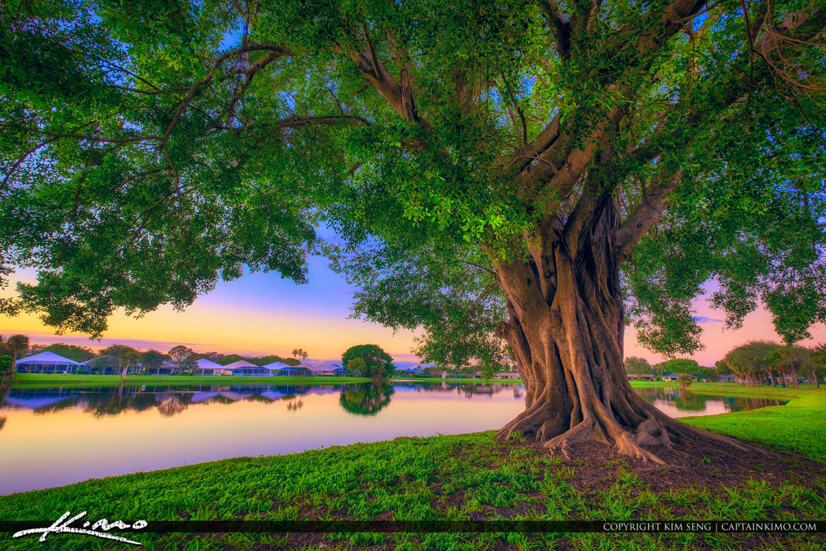 Palm Beach County | Product Categories | Royal Stock Photo | Page 68