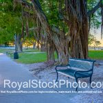 Sarasota Bayfront Bench by Tree