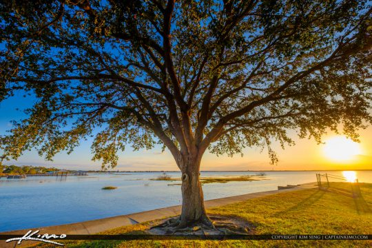Large Live Oak Tree Lake Jackson Fishing Pier Sebring Florida