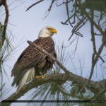 Eagle Palm City Florida I-95