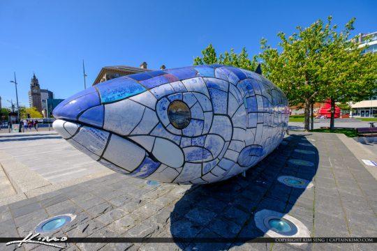 Big Blue Fish Upclosee Belfast Northern Ireland