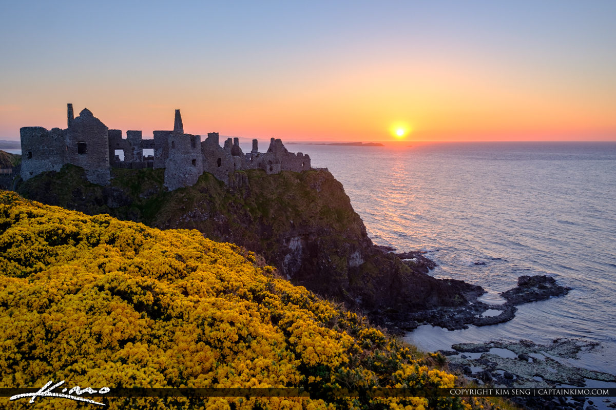 Dunluce Castle Northern Ireland Yellow Flowers At The Castle Royal