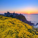 Dunluce Castle Northern Ireland VErtical View Yellow Flowers