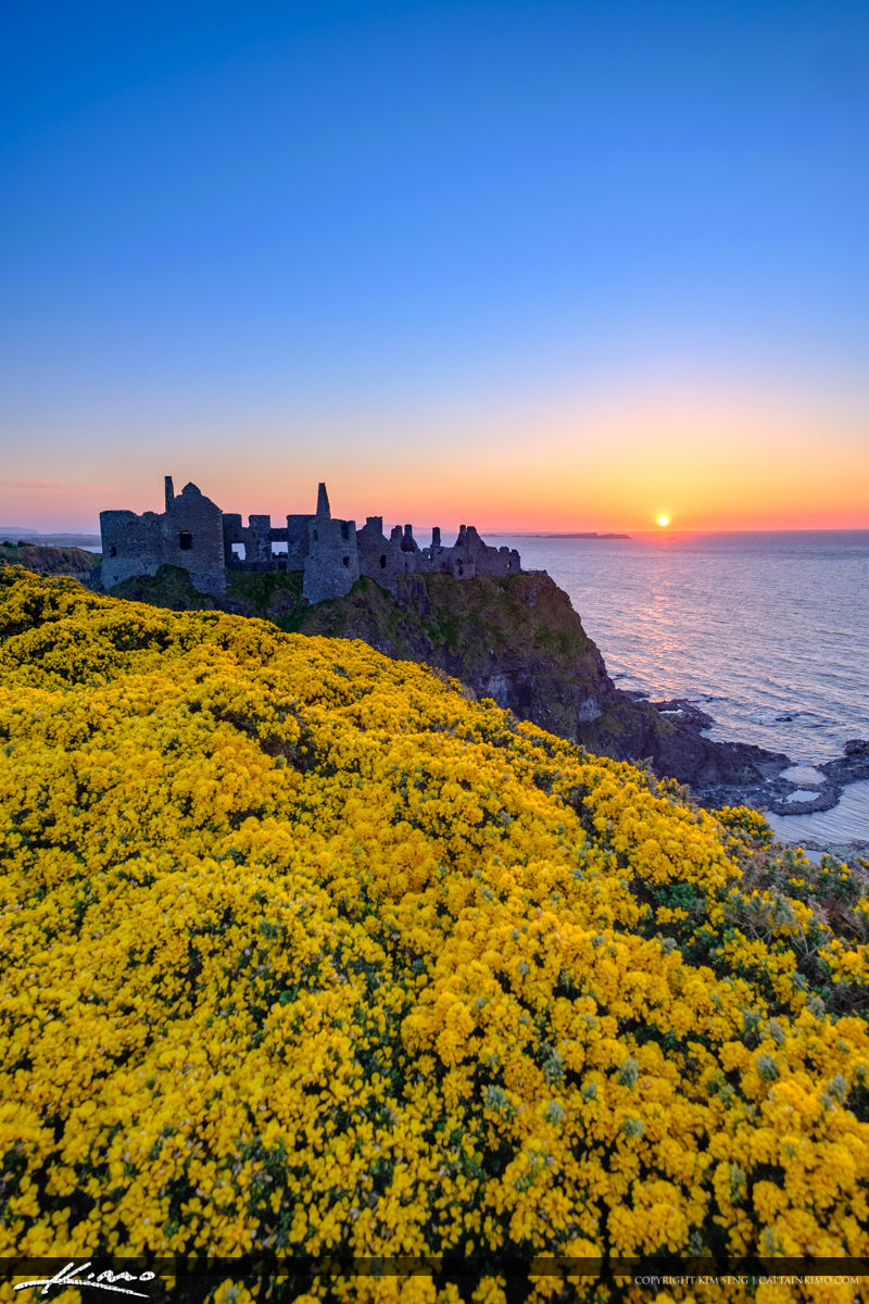 Dunluce Castle Northern Ireland Vertical View Yellow Flowers Royal