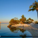 Beach Coconut Tree Gilberts Resort Key Largo Florida Keys
