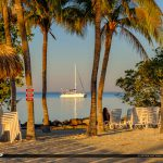 Coconut Tree View Gilberts Resort Key Largo Florida Keys