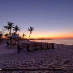 COconut Tree at Beach Sunrise Sombrero Beach Marathon Florida Ke