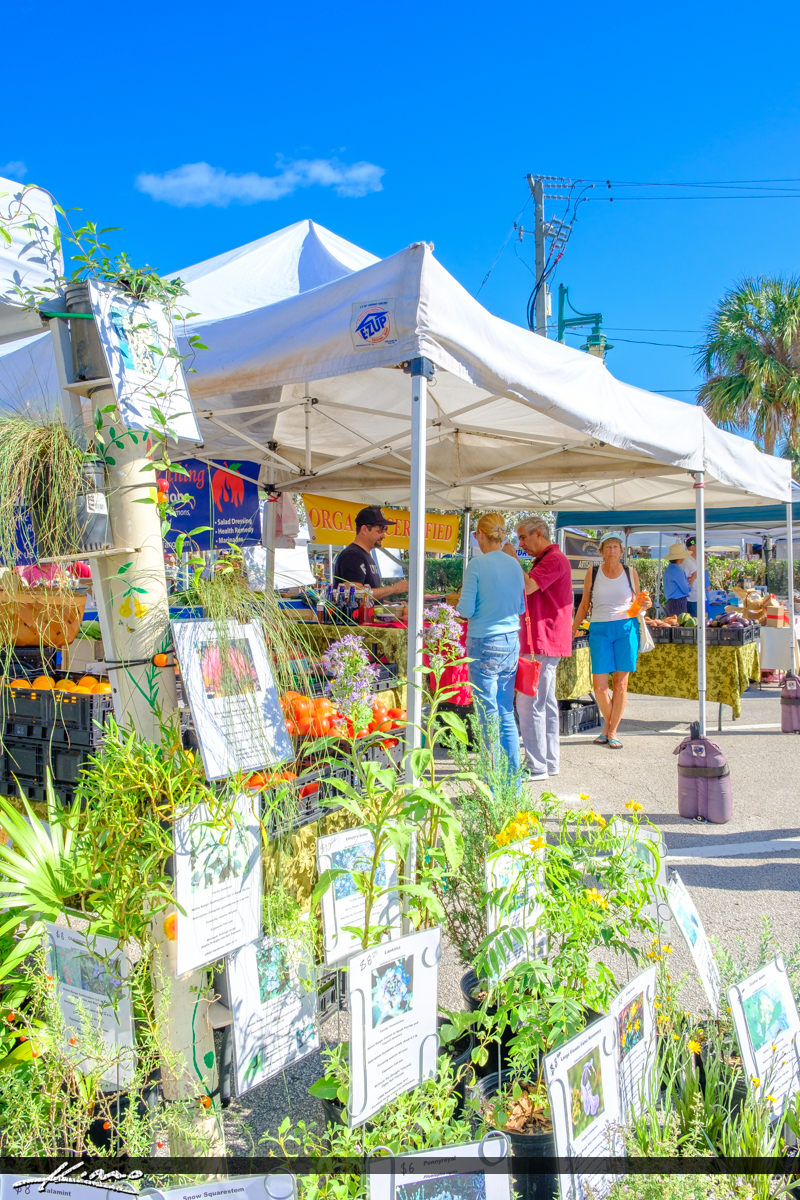 Vero Beach Product Categories Royal Stock Photo Page 5