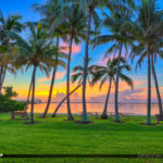 Sewalls Point Park Coconut Tree Sunrise Waterway