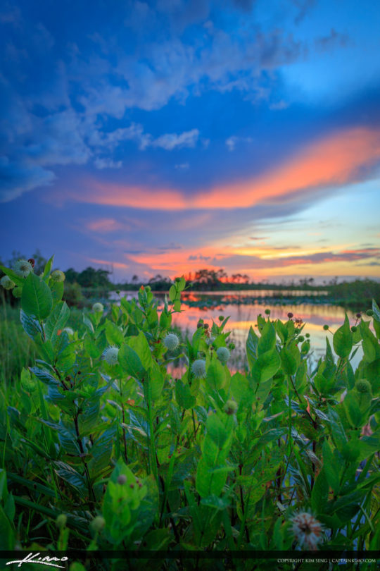Cotton Ball Wetlands Sunset Lake