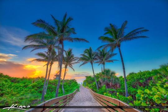 Coconut Tree Ocean Reef Park Singer Island Florida July 2018