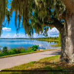 Winter Haven Florida Lake Howard Florida Oak Tree