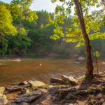 Dupont State Forest North Carolina at the River Tree Swimming at