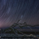 Star Trail Driftwood Beach Jekyll Island Georgia Golden Isles