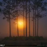 Foggy Morning Moon Setting Over Florida Landscape Pine Forest Ye