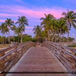 Coconut Trees at Bridge Jupiter Inlet Florida Dubois Park