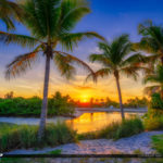 Coconut Tree Sunset Jupiter Inlet Park Florida