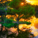 Cypress Tree Wakodahatchee Sunrise