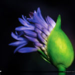 Purple Flower Art