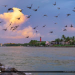 Pigeons Jupiter Inlet Lighthouse at Inlet