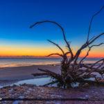 Driftwood  Beach Jekyll Island Georgia Sunrise