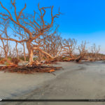 Dead Trees at Driftwood Beach in Jekyll Island Georgia
