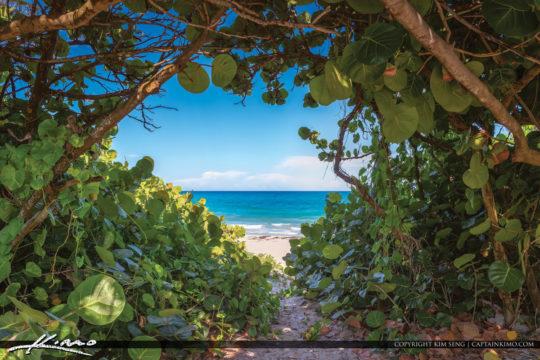Bluewater Beach Secret Entrance View Through Seagrape Trees Jupi