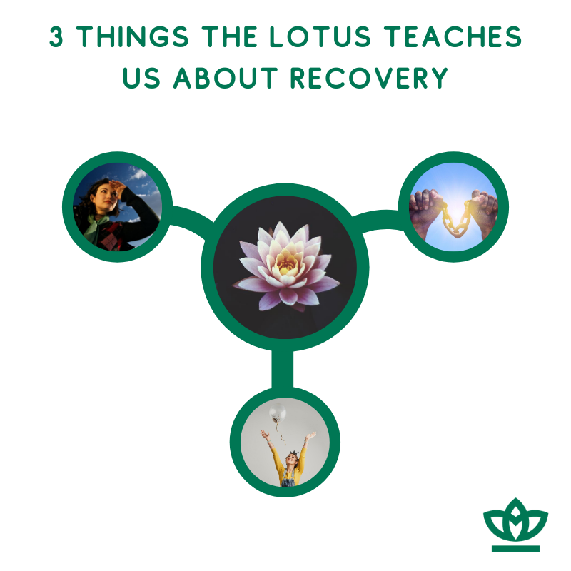3 things the lotus teaches us about recovery