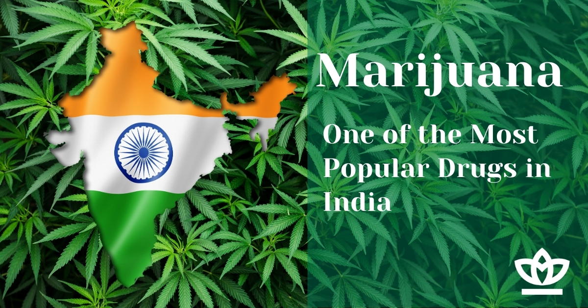 Marijuana one of the most popular drugs in India