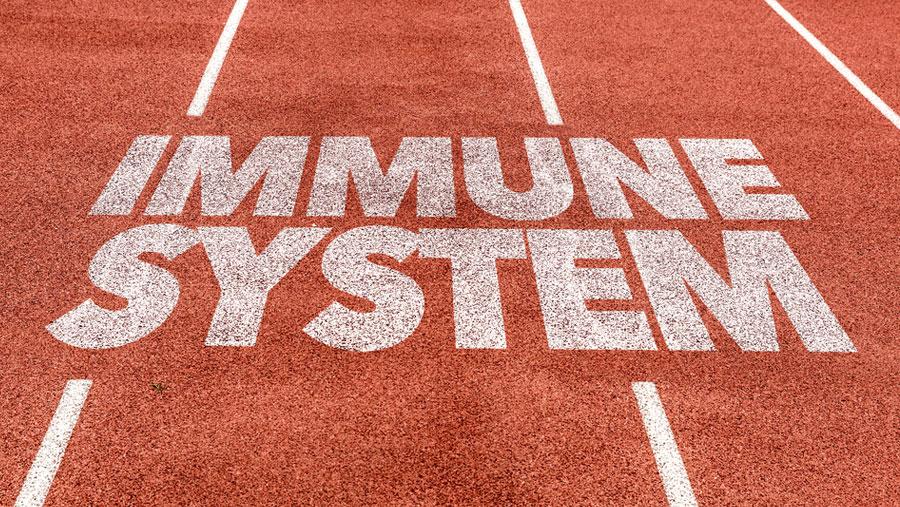 4 Foods For Better Immune Support.