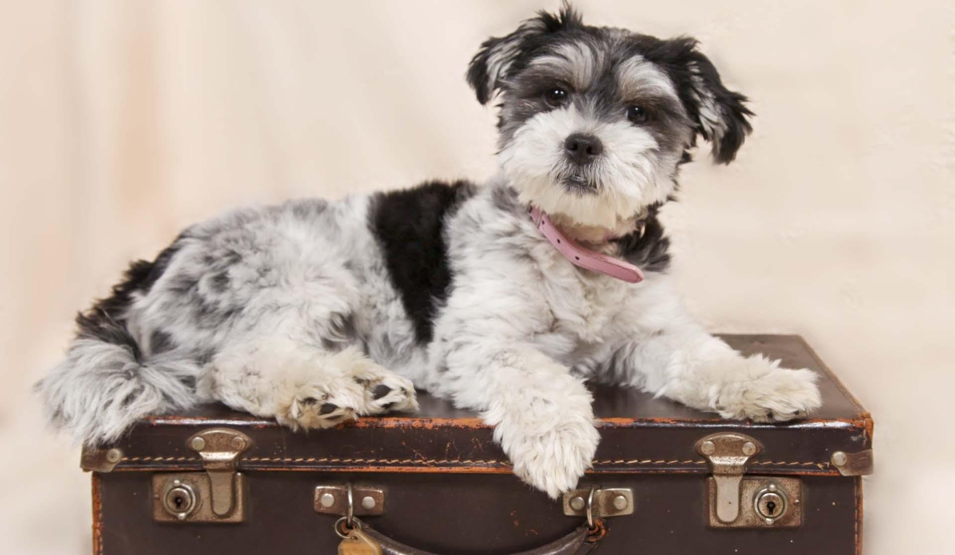 Recomendaciones para viajar con las mascotas en los terminales de transportes