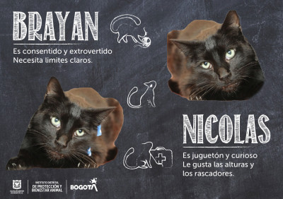 Foto de: Instituto de Protección Animal