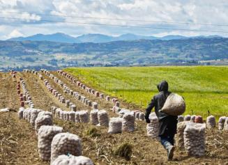 'Sumercé', la iniciativa que apoya a los productores del campo
