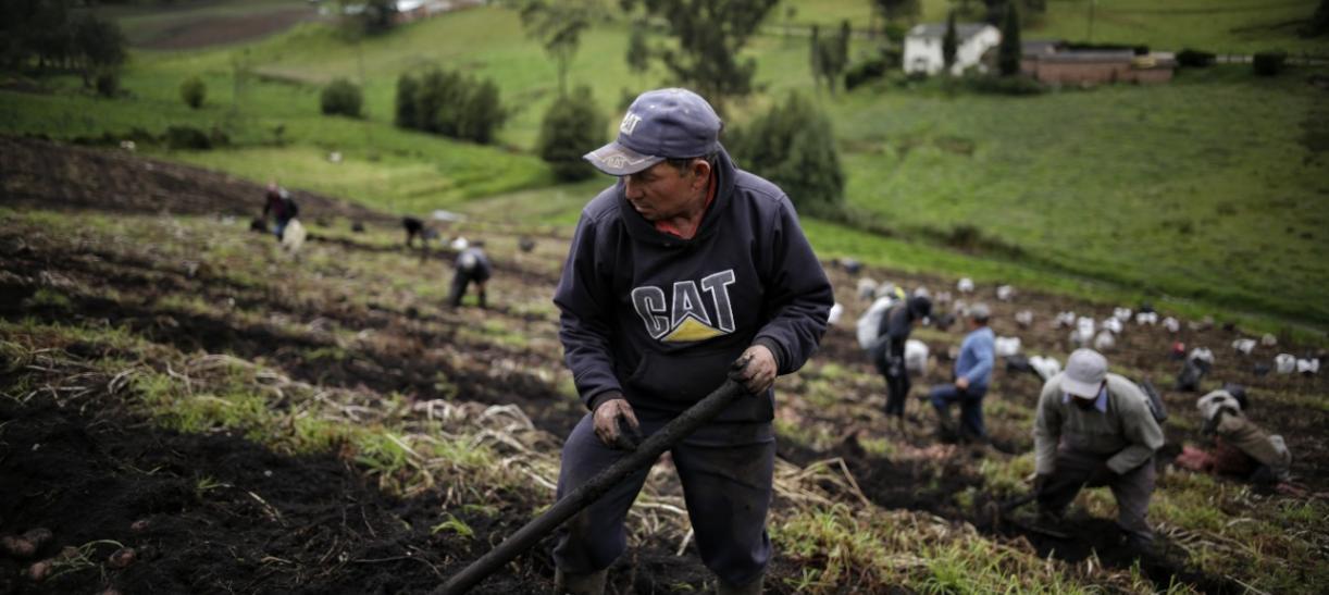 Prima para agricultores