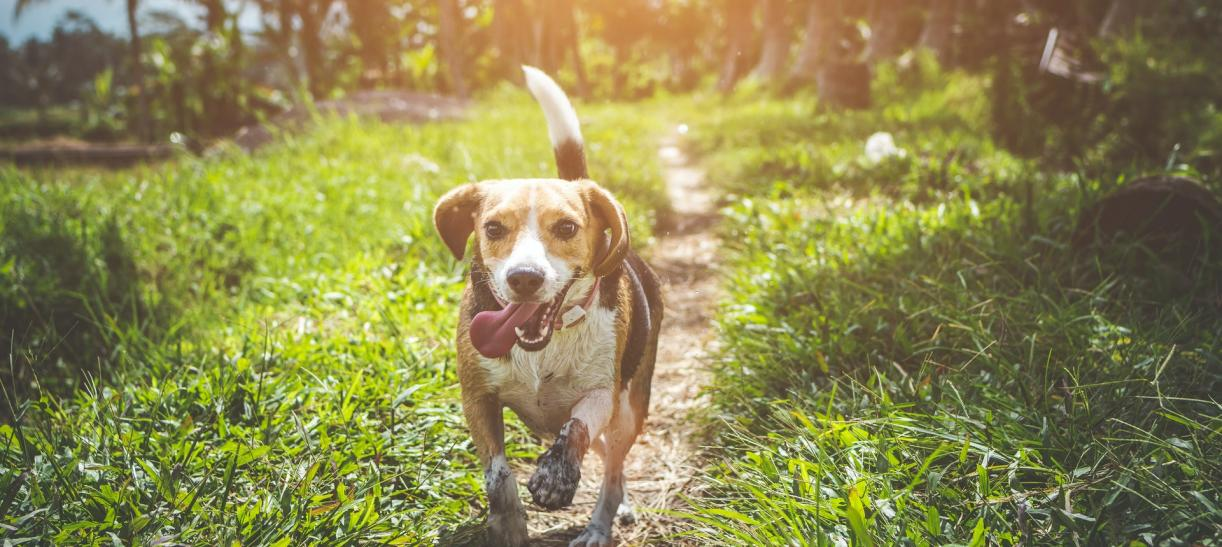 3 hábitos para tener una mascota sana y activa