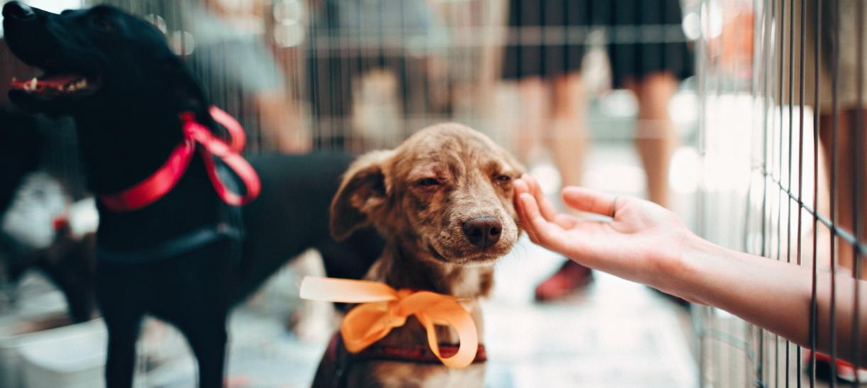 Denunciar maltrato animal en Bogotá