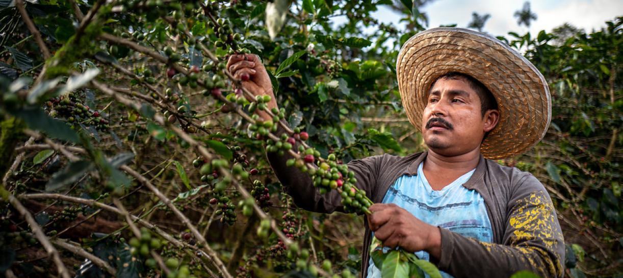 Conoce todo sobre la historia y variedades del café colombiano