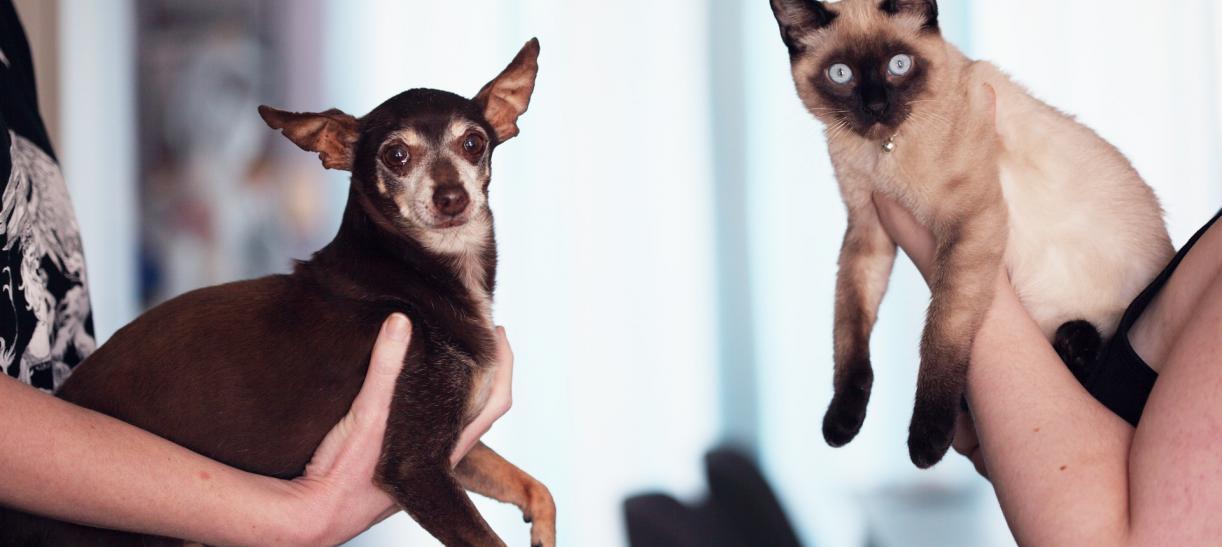 Lleva a tu mascota a la jornada de esterilización gratuita