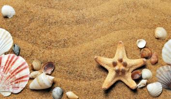 Imagen de varias conchas y una estrella de mar en la arena