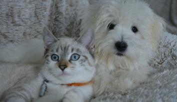 Imagen de un gato y un perro