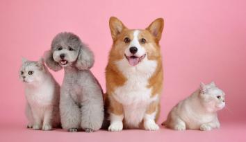 Imagen de dos perritos y dos gaticos