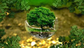 Imagen de un árbol dentro de una burbuja