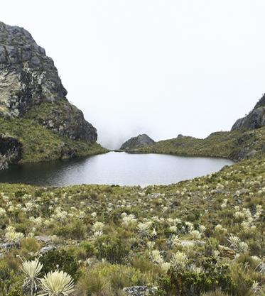 Páramos por la vida: la propuesta que protege estos ecosistemas