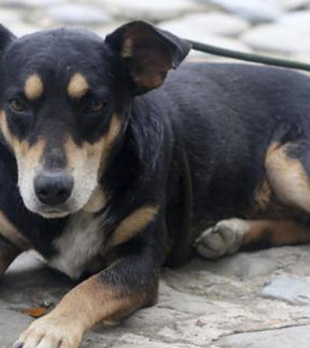 Estas son las condenas en Colombia por maltrato animal