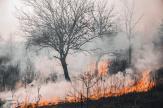 ¿Cómo podemos prevenir incendios forestales?
