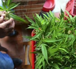 Ley de la marihuana recreativa, vacuna de covid y apoyo al campo; los hechos del día